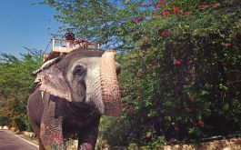 Karnataka Tour Packages | Book Karnataka Packages | Thomas Cook